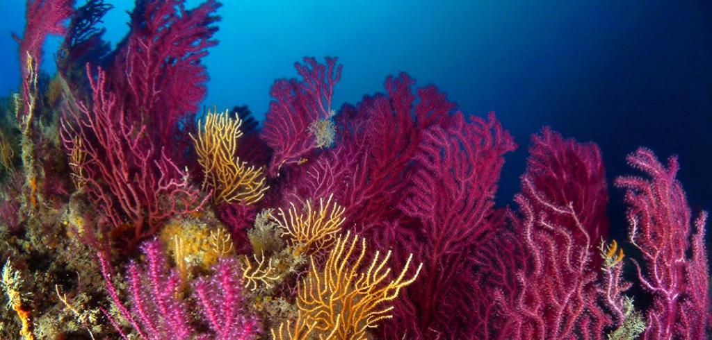 Secche di Tor Paterno, un paradiso per i sub a 5 chilometri dalla spiaggia di Capocotta, nel fondo del mar Tirreno.