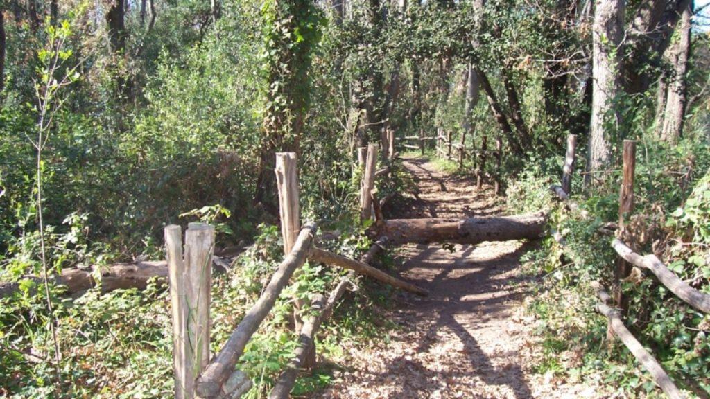 Bosco di Palo Laziale - Sentiero